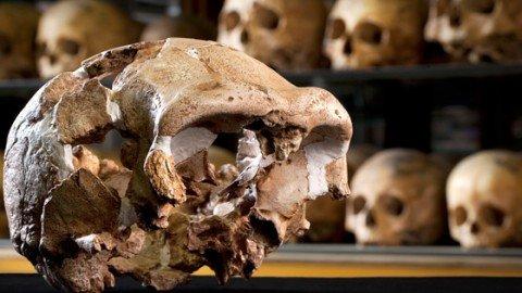 Giallo nel Pleistocene