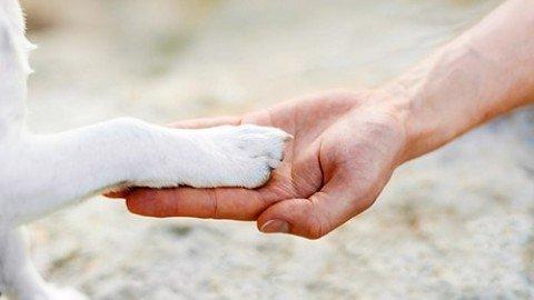 E l'uomo incontrò il cane: le origini di un'amicizia che sfida i millenni