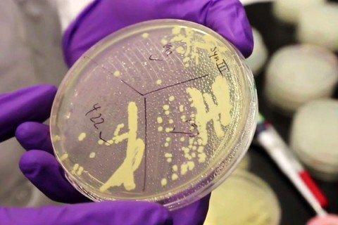 Creato il primo batterio sintetico con i soli geni della vita