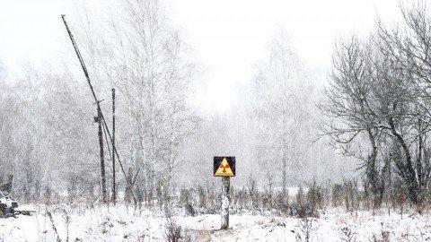 Trent'anni di solitudine: i mammiferi di Chernobyl ringraziano