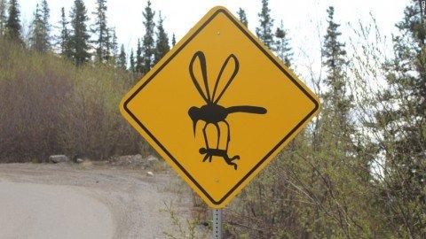 Zanzare: prevenire e.. geo-localizzare è meglio che curare!