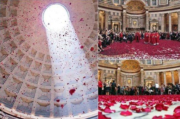 Pantheon petali rosa