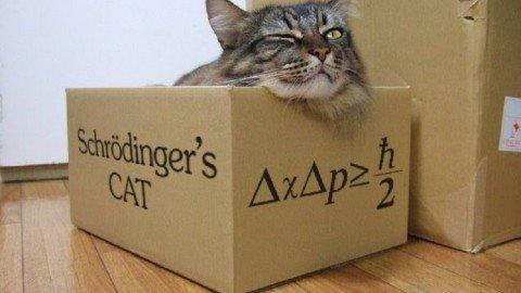 L'imprescindibile legame quantistico fra gatti e scatole