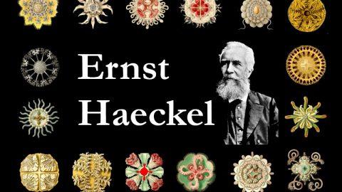 Ernst Haeckel: la fusione di scienza e arte in un biologo romantico