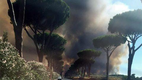 """Roma, arrestato il presunto piromane della pineta di Castelfusano. Raggi: """"Il municipio non può essere lasciato solo"""""""