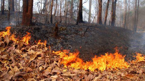 Dopo il fuoco, le cicatrici: il bosco, la macchia mediterranea e gli incendi