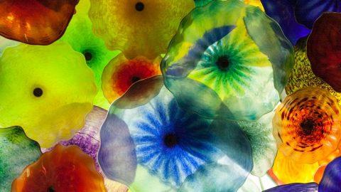 Sfumature di biologia: tutti i COLORI tra visione e evoluzione (parte II)