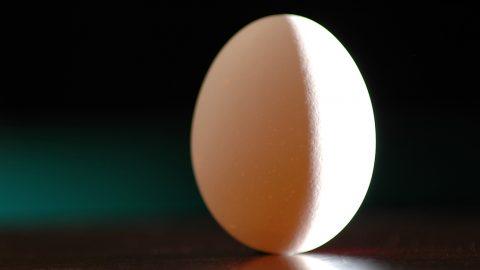 Breve riassunto scientifico di un agosto tra uova, eclissi e terremoti