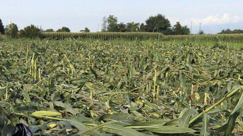 Il parlamento Ue blocca i dipendenti della Monsanto: manca chiarezza sul glifosato