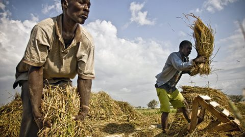 Guerre e clima, per la prima volta da 10 anni sulla Terra ci sono più persone affamate