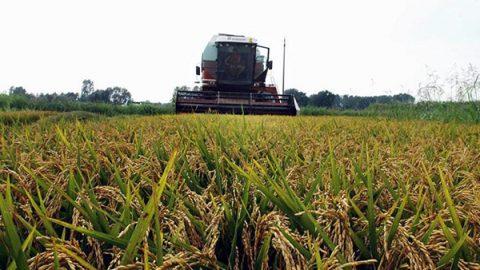 Agricoltura sempre più green: cala l'uso di pesticidi