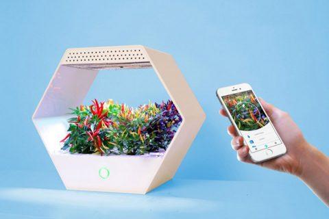 L'orto in casa a portata di smartphone