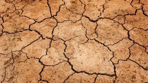 """Clima, Italia a secco. Coldiretti: """"15 mld di metri cubi di acqua in meno"""". Verdi: """"Incendi come d'estate"""""""