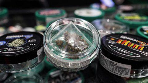 La Cassazione: vendere la cannabis light è reato. Ora ci sono 15 mila negozi a rischio