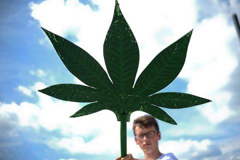"""Cannabis light, pubblicate le motivazioni. La Cassazione: """"Vanno bene alimenti e cosmetici, ma non fiori e resina"""""""