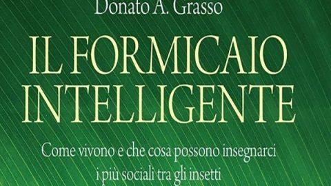 Il formicaio intelligente // Donato A. Grasso