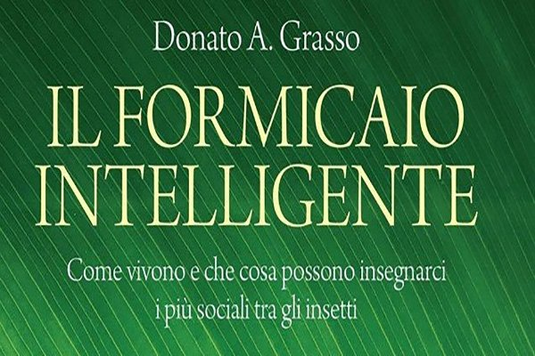 il formicaio intelligente