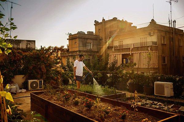 coltivatore libano